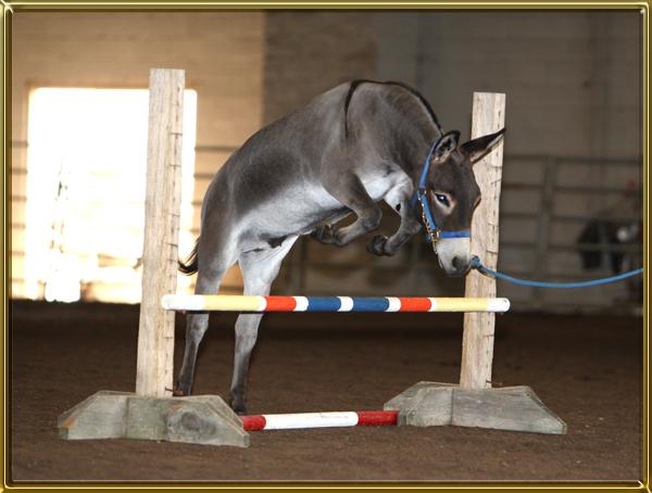 Tell Me About Miniature Donkeys - Benson Ranch Miniature Donkeys, LLC