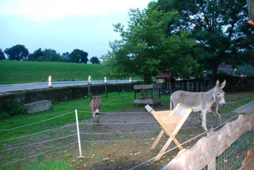 L pasture c 600