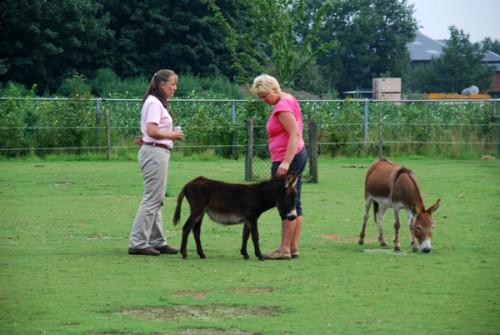 N foal c 600