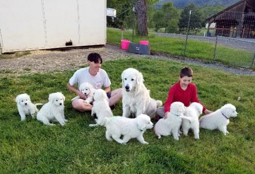 Hannah pups 5-8-17