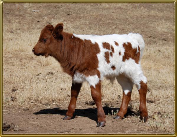 Frost bull sd 6-23 cf 600